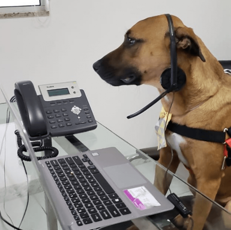 Dog salesman