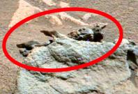 Alien fossil on Mars