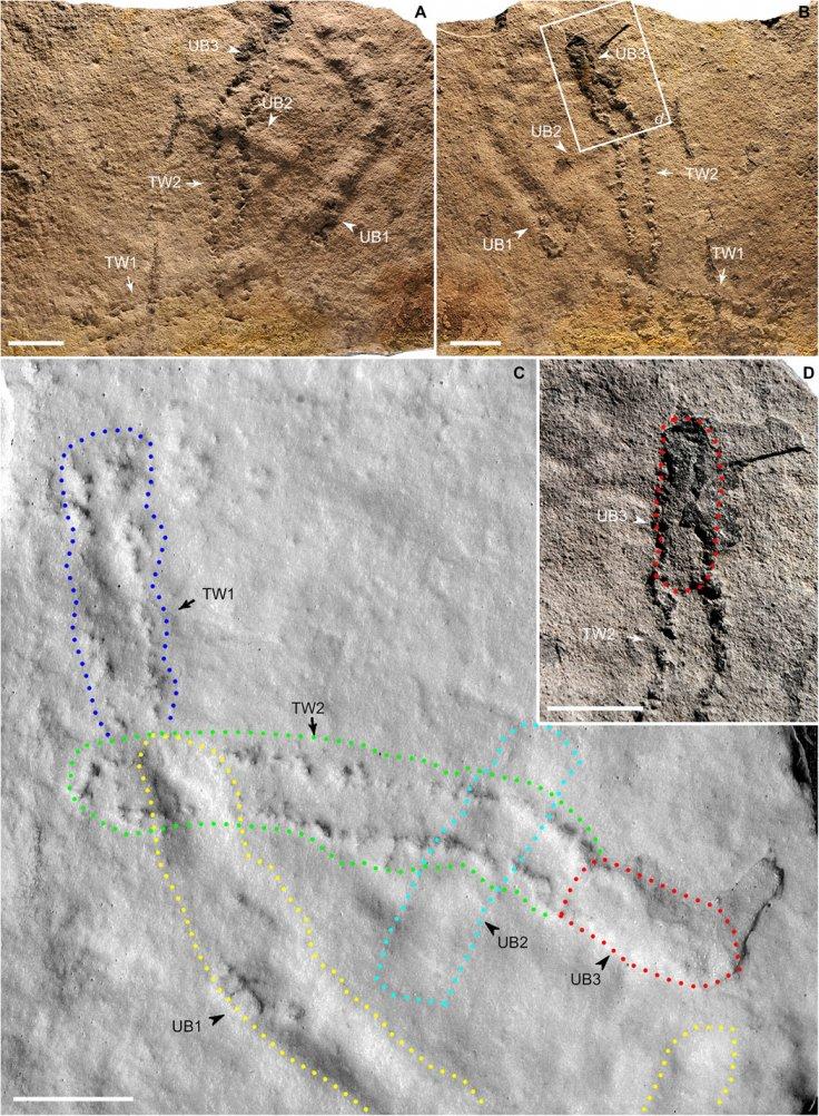 Oldest-ever footprints