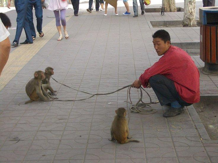 Monkeys Entertaining Tourists in China
