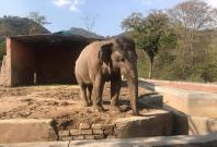 Kaavan, The Elephant