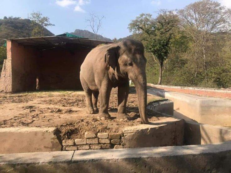 Kaavan, The Elephant