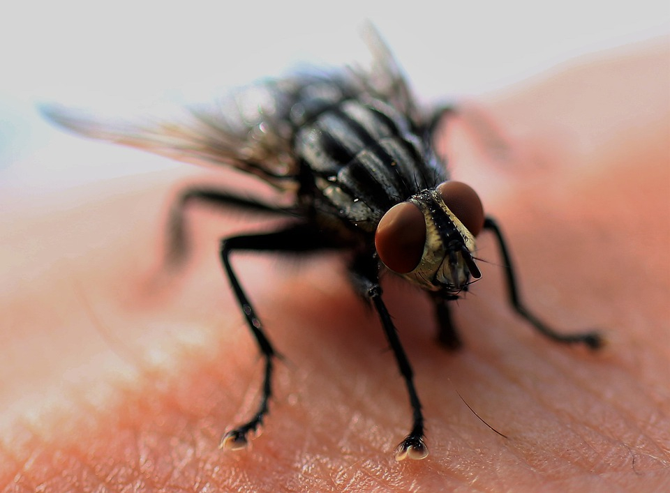 Man's Attempt To Swat A Fly Accidentally Blows Up His Home