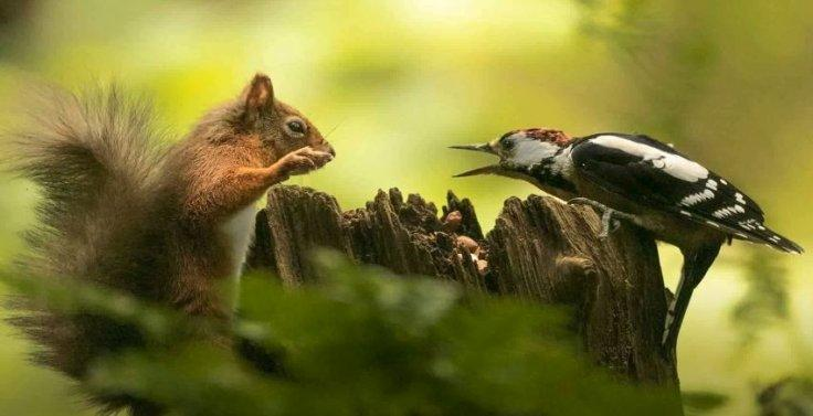Squirrel and Woodpecker Fight Over Nuts