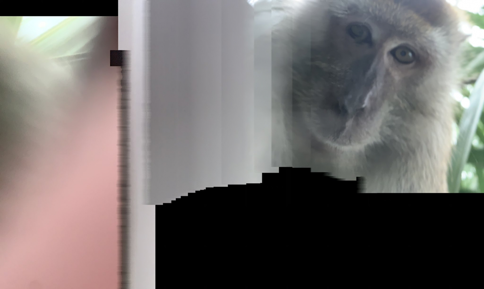 Just monkeying around: Primate steals phone from sleeping student, then takes selfies