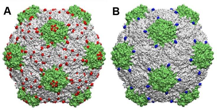 CPMV structure