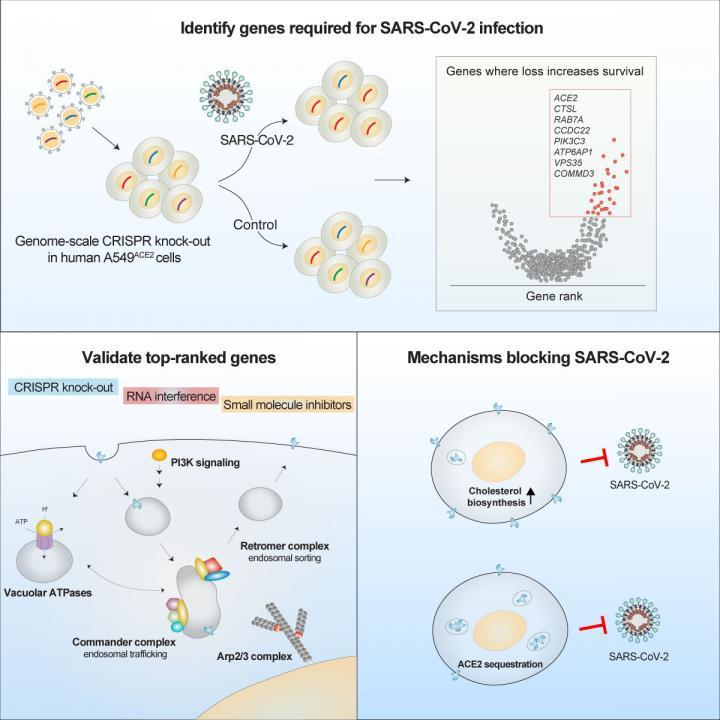 Identification of required host factors for SARS-CoV-2 infection in human cells