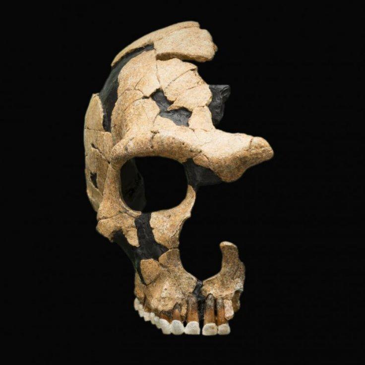 Saint Cesaire skull