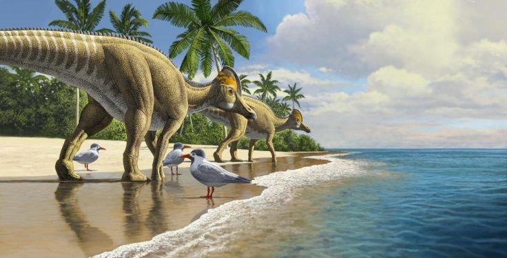 Duckbill dinosaurs