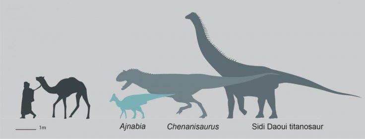 Ajnabia odysseus