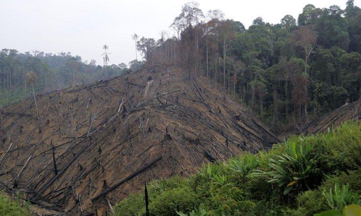 Sumatra  Orangutans lost their habitat