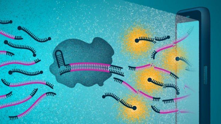 CRISPR gene-editing technology and a smartphone