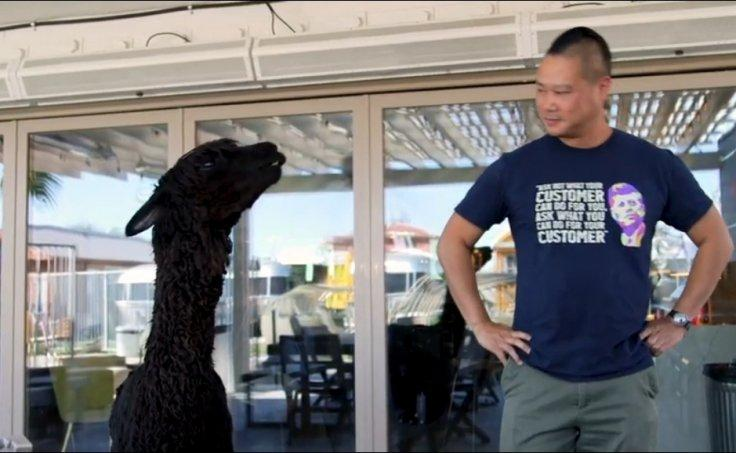 Hsieh with pet Alpaca