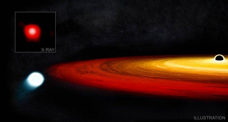 Star Survived Black Hole