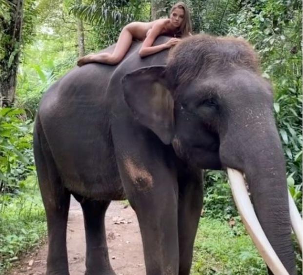 Alesya Kafelnikova: Russian Instagram Influencer Slammed by Animal Group  for Posing Naked on Elephant