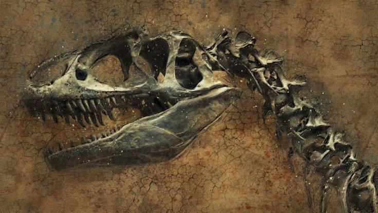 Dinosaurs Fossils Bones Skeltons