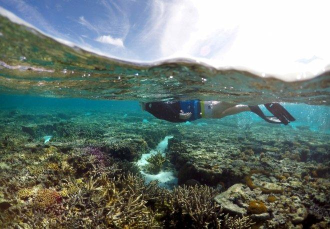 Japanese tourist dies at Great Barrier Reef in Australia