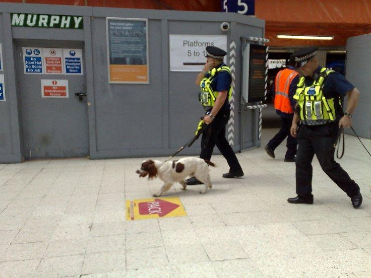Sniffer dogs for Covid-19 detection