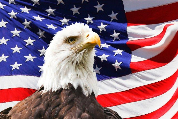 USA American Flag Bald White Eagle