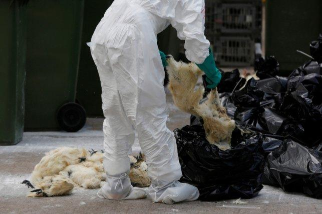 China confirms second human bird flu infection; stops poultry sales
