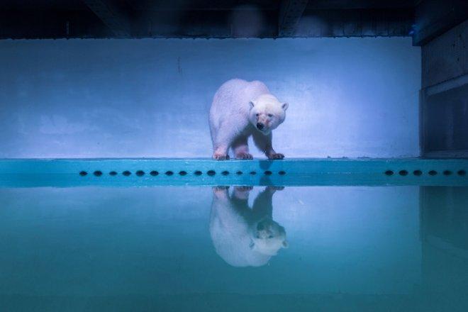 Polar bear Pizza