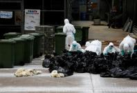 Shanghai and Hong Kong confirm new human cases of H7N9 bird flu infection