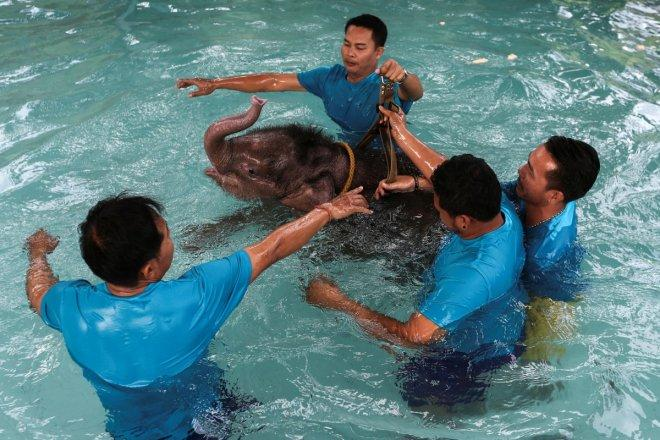 Baby elephant undergoes rehabilitation in Thailand