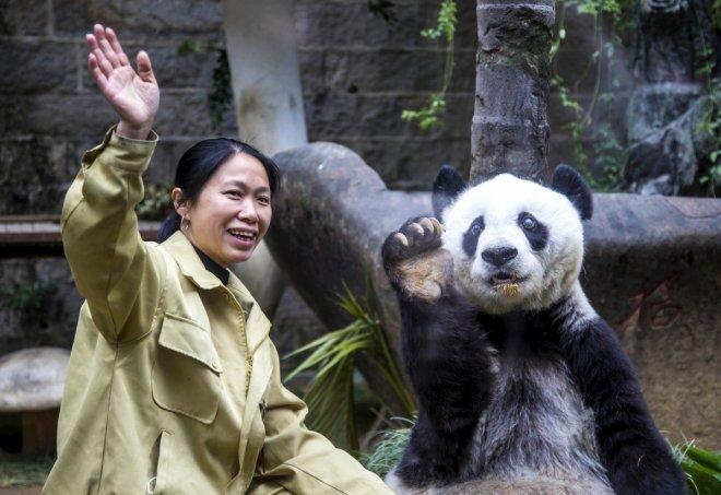 Happy Birthday Basi: World's oldest captive panda turns 37