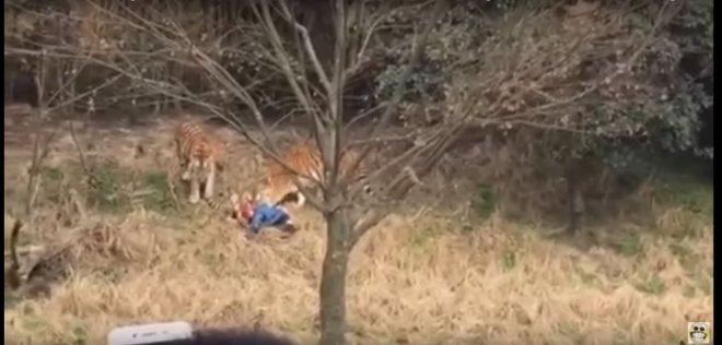 Tiger kills man in China wildlife park