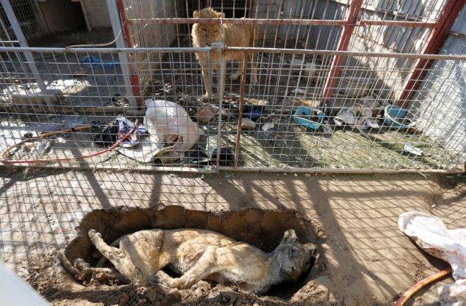 Mosul Zoo