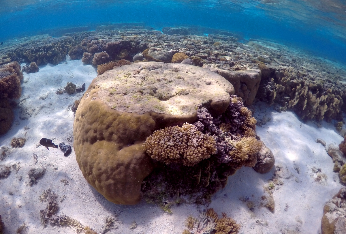 Sonic youth: healthy reef sounds lure young fish to degraded areas