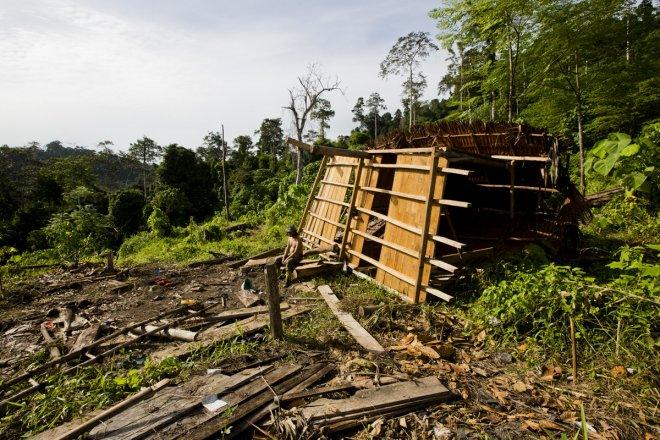 Leuser Ecosystem clearing