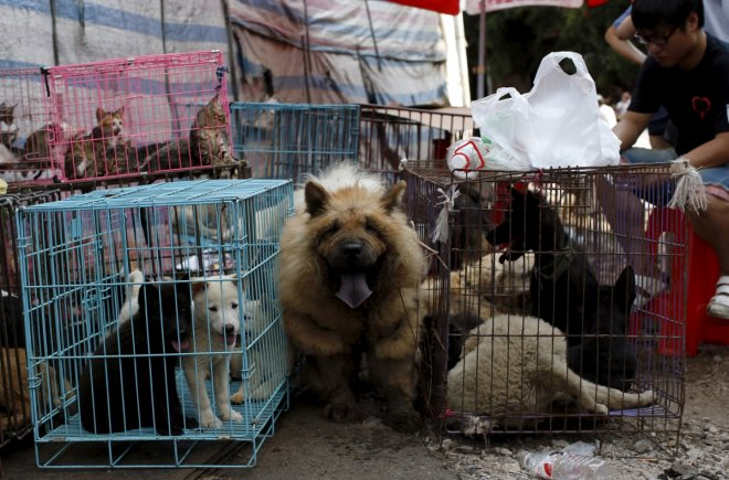 Taiwan becomes first Asian country to ban dog and cat meat; offenders face 2-year jail, $65,500 fine