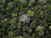 World Earth Day 2017