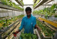 Singapore set to offer land plots to encourage high-tech farming